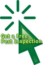 Get a Free No Obligation Pest Inspection.