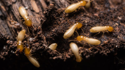 Termites Are a Problem Year Round – Interesting Facts to Know