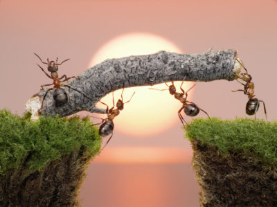 Ants Sacrifice Sick Companions, Putting Colony Growth First