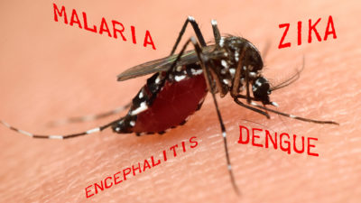 Mosquitoes Transmit More Diseases Than Any Other Pest