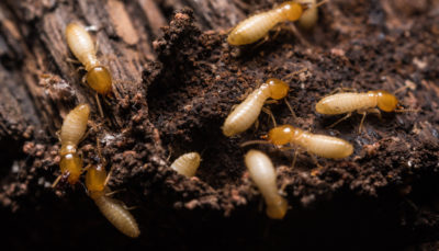 Signs of an Early Spring Termite Infestation – What to Know