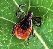 Checking Your Child for Ticks After Playing Outside Is Essential