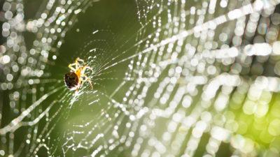 Spiders To Watch Out For Inside Your Home Now That It's Cold