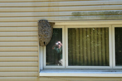 Here's Why Wasp and Hornet Nests Should Be Removed in the Fall