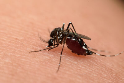 Diseases Carried by Mosquitoes in New Jersey