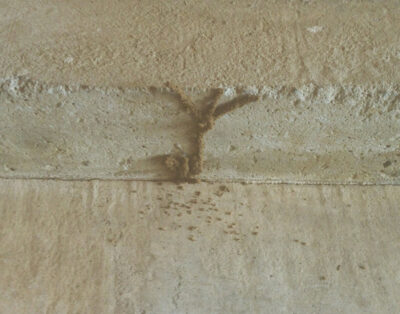 What to Know About the 'Other' Termites – Dry Wood Termites
