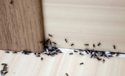 What Rutgers University Wants You to Know About Our Local Ants
