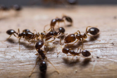 Six Types of Ants You May See This Summer In New Jersey