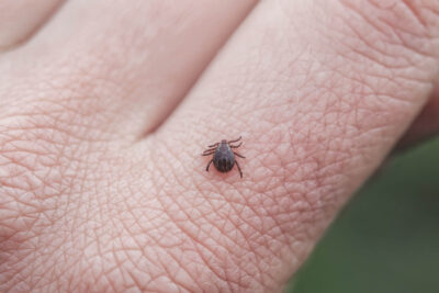 North-eastern States Pose High Risk For Lyme Disease