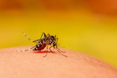 Mosquito Myths Such As Tastier Humans, Anti-Mosquito Diets, and Perfume Attractants Debunked